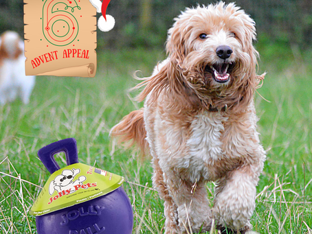 Advent Appeal - Day 6