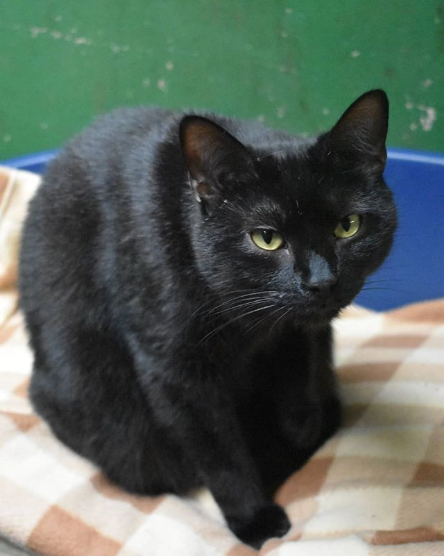 If you've ever wanted a mini panther roa