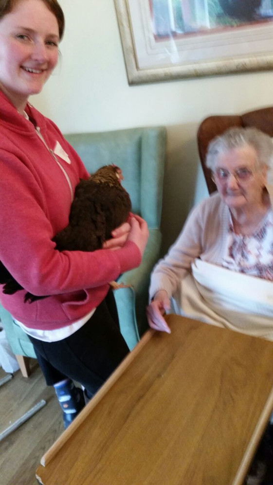 Visiting with Mrs Leghorn