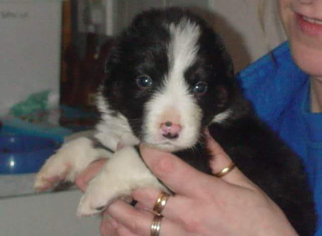 The 'Tail' of 5 orphaned pups - 10 years on!