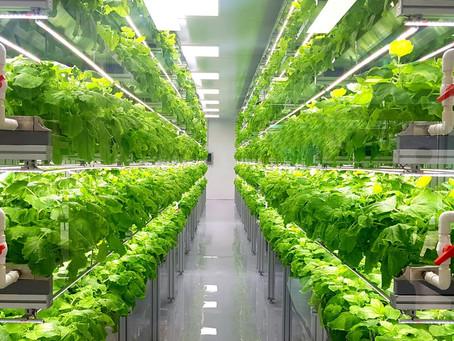 L'idroponica e la coltivazione fuori suolo