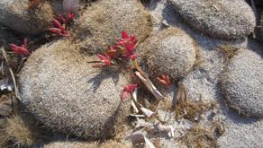La Posidonia Oceanica: quando una risorsa viene vista come un problema