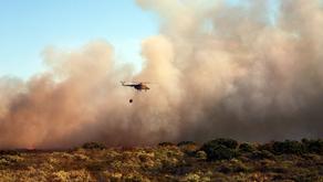 Gli incendi possono portare benefici al terreno e all'ambiente?