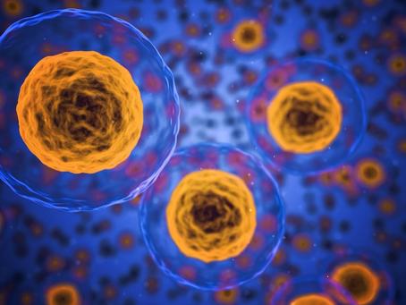 Cellule tumorali nella sperimentazione preclinica di farmaci: da  condanna a morte a risorsa