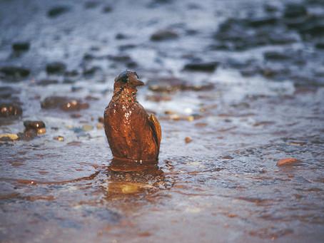 A Toxicidade do Petróleo Bruto