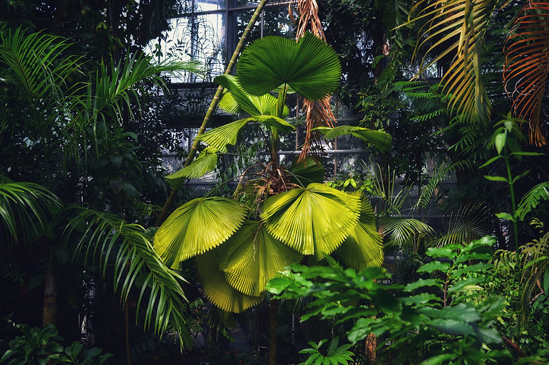 Copy of botanicus 1.jpeg