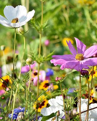 flower-meadow-3598552_1280.jpg