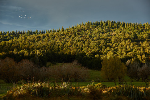 Autumn landscape photographed by Alasdair Jardine. Canterbury, New Zealand.