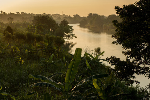 Tropical vegetation along the Aceh River, Indonesia. Landscape photography by Alasdair Jardine.