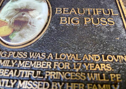 beautiful big puss.jpeg