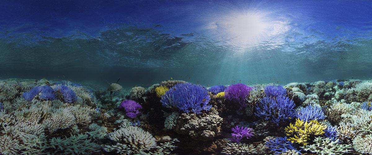 Starfish_Digital_EcoSystem.jpg