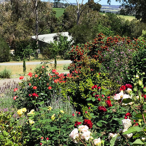 Rose_Garden_Karawatha_Cottages_McLaren_V
