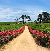Wine_Walk_Dogridge_McLarenVale_Accommoda