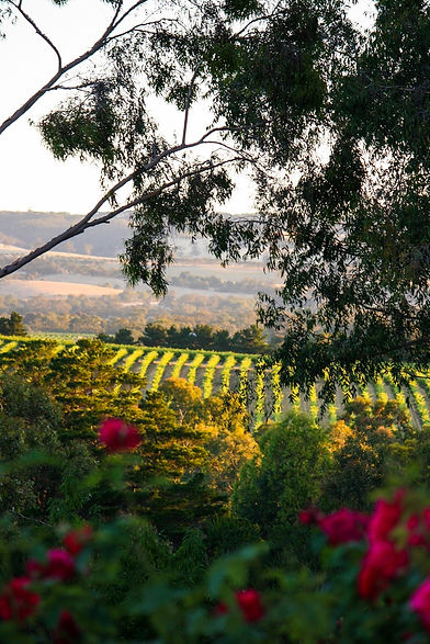 Karawatha Cottages McLaren Vale evening