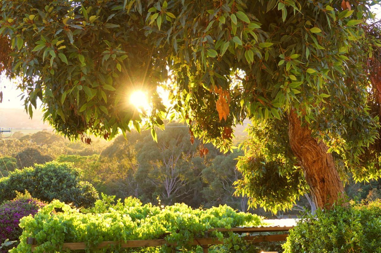 Sunrise at RELISH Cottage
