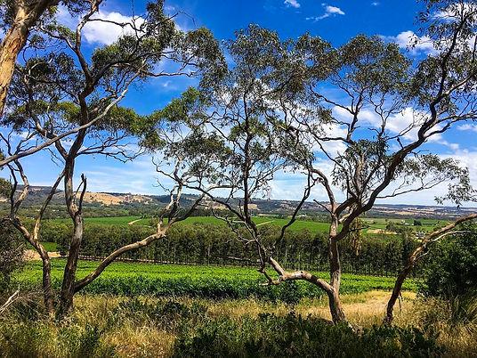 Wine Walking Trail Karawatha Cottages Mc