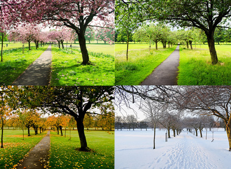 Seasons of Cancer