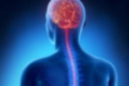 brain-spine.jpg