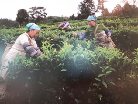 """孔子学院在多博伊市举办""""茶,爱,世界""""主题图片展"""
