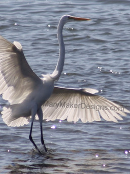 Great Egret at San Diego River Channel