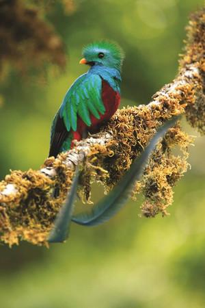 CR_Quetzal #2.jpg