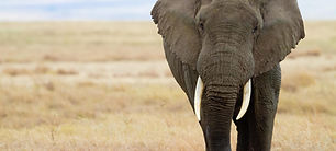 Addo Elephant Park.jpg