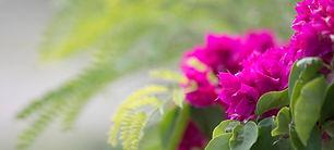 FP_ASP_RSAY18_Flowers_Savala Island_Fiji