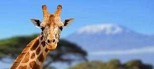 AF_Serengeti_nationalpark.jpg