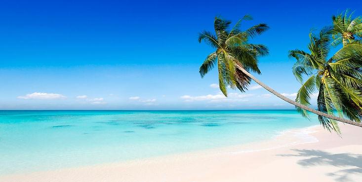 KA_Caribbean_palm_tree.jpg