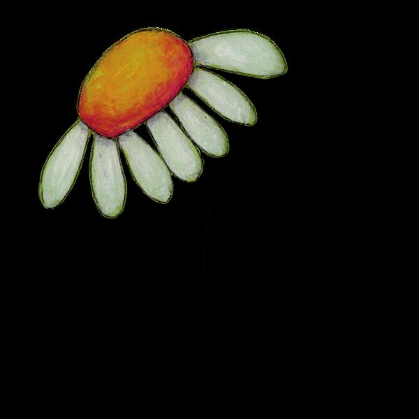 illustration de fleur marguerite - daisy flower illustration