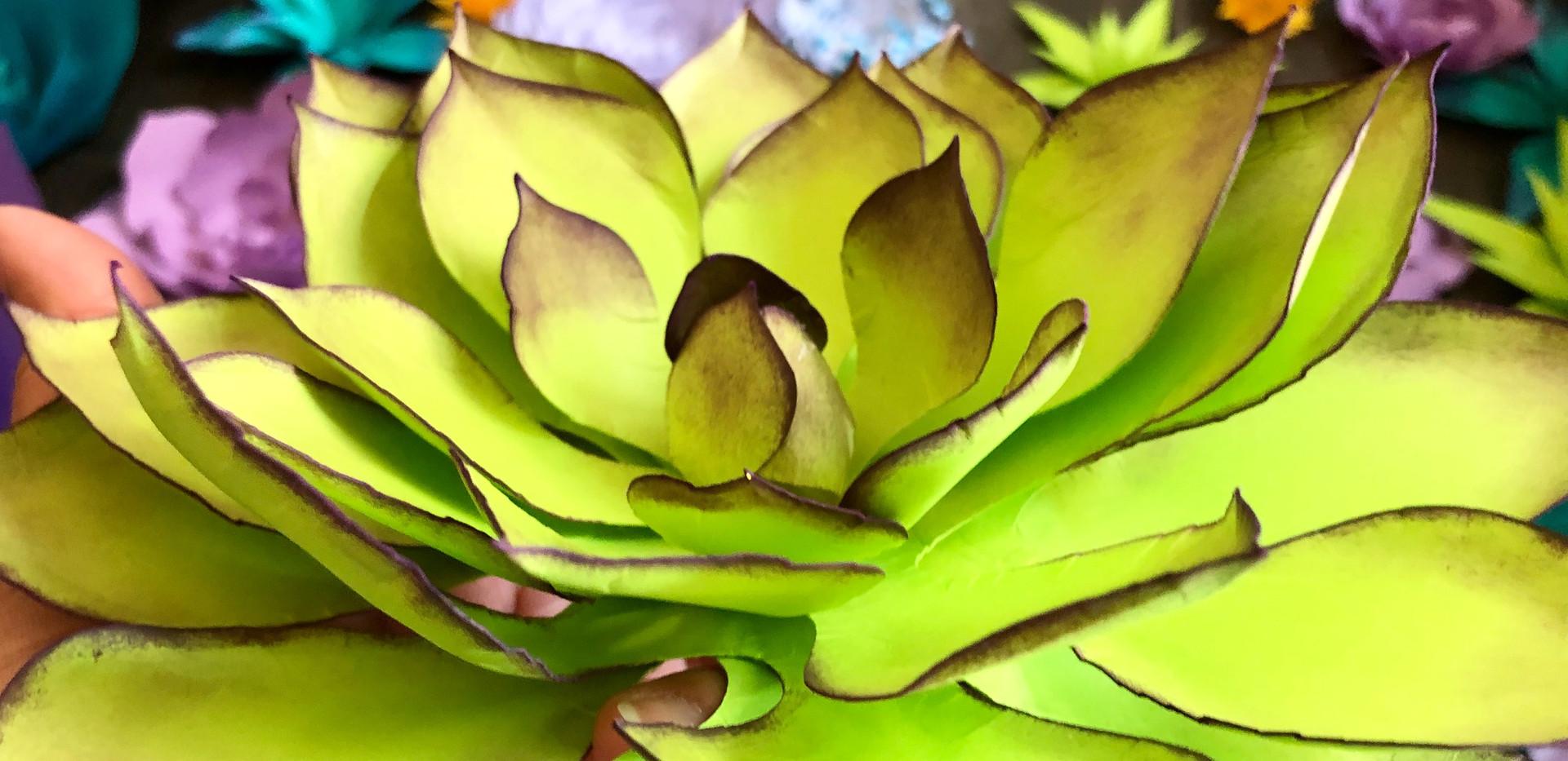 Giant paper succulents
