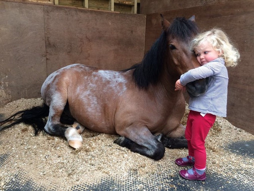 Retired from driving now, Felix enjoying his new life! Thanks to Margaret Rogers at Hr Venton Farm.