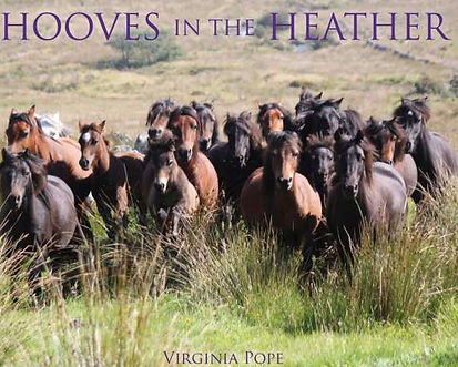 Hooves in the heather_edited.jpg