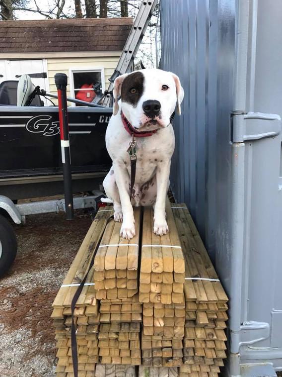 Zuko on pile of wood.jpg