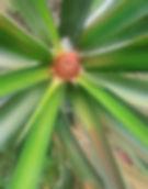 pineapple_flower.jpg