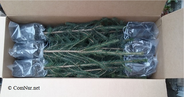 BOX_Spruce_edited.png