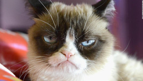 What the life (and death) of Grumpy Cat teaches us about the spectacle of animal disability