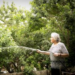 משקה את הגינה