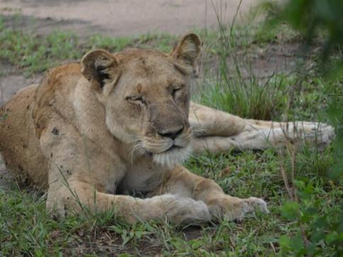 bed_breakfast_safari_06.jpg