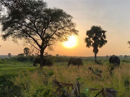 home_villa_katwe_safari_06.jpg