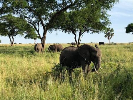 home_villa_katwe_safari_01.jpg