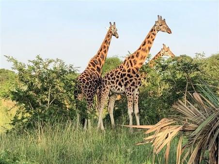 home_villa_katwe_safari_04.jpg
