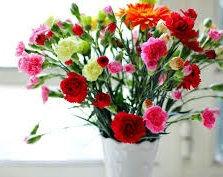carnations4.jpg