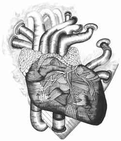 Plumbing the Human Heart