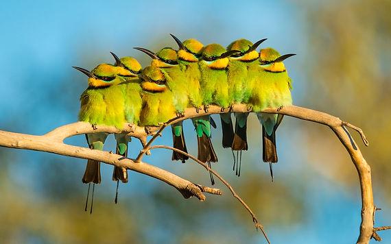 family of birds (yellow).jpg