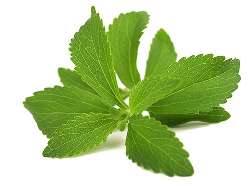 Stevia, the natural reason The Other Side of Coffee has only 25 calories