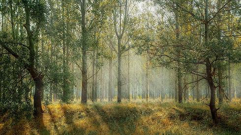 forest-1072828_1920.jpg