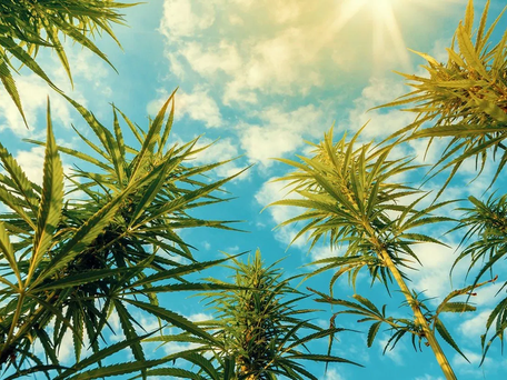 IS CBD IN TROUBLE: THE FARM BILL AND ITS IMPACT ON CALIFORNIA