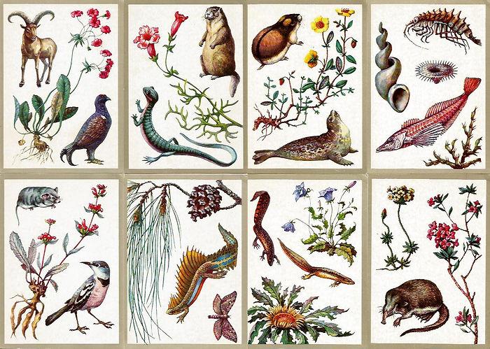 cards.jpg