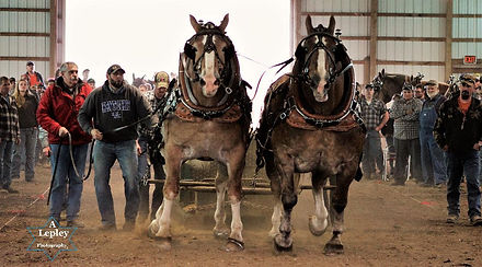 A sport with a team of equine athletes!